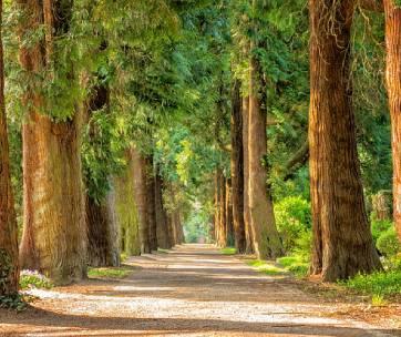 une forêt de sequoia