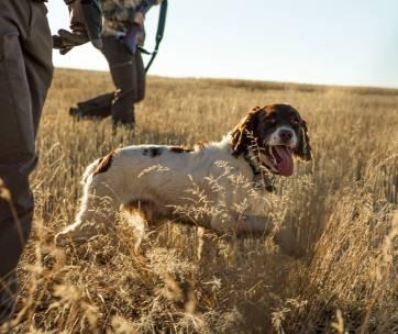 un chien à la chasse dans un champ