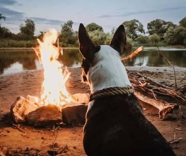 un chien qui regarde un feu de camp sur une plage