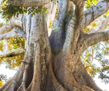 arbre préserve la planète