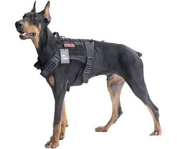chien avec veste tactique de dressage