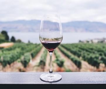 verre de vin rouge dans une vigne