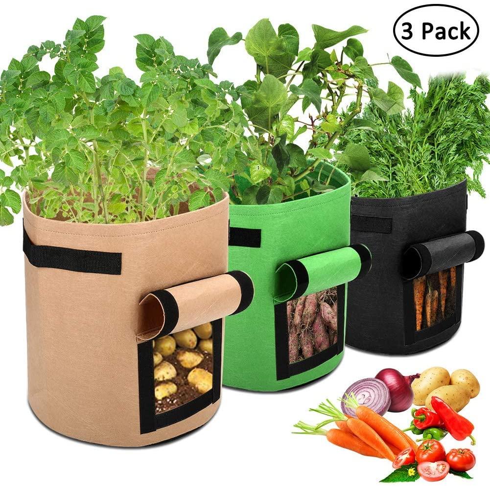kit de jardinage pour faire pousser avocat à la maison